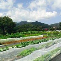 自家農園TAPIS FARM