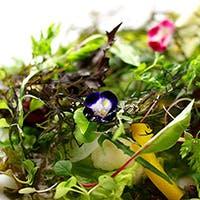こだわりの新鮮な京野菜