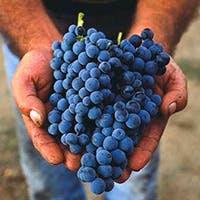 ソムリエ厳選!北から南までイタリアワイン約100種常備