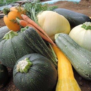 毎朝届く、三浦半島の新鮮な有機野菜や三崎港直送の鮮魚など