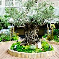 "~Bliss in the Nature~ 神戸国際会館の最上階 ""屋上庭園"""