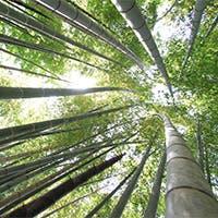 鎌倉随一の広大な庭園の中に佇む、重厚な和風建築