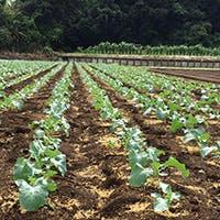 加藤瑛一シェフの手による自家畑野菜を生かしたお任せコース