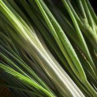 料理 「葱」の魅力を存分に味わいながら「旬」のものを楽しむ