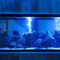 Ryuduki Aquarium dininng
