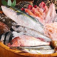 鮮度抜群の旬の海鮮を使用したお料理