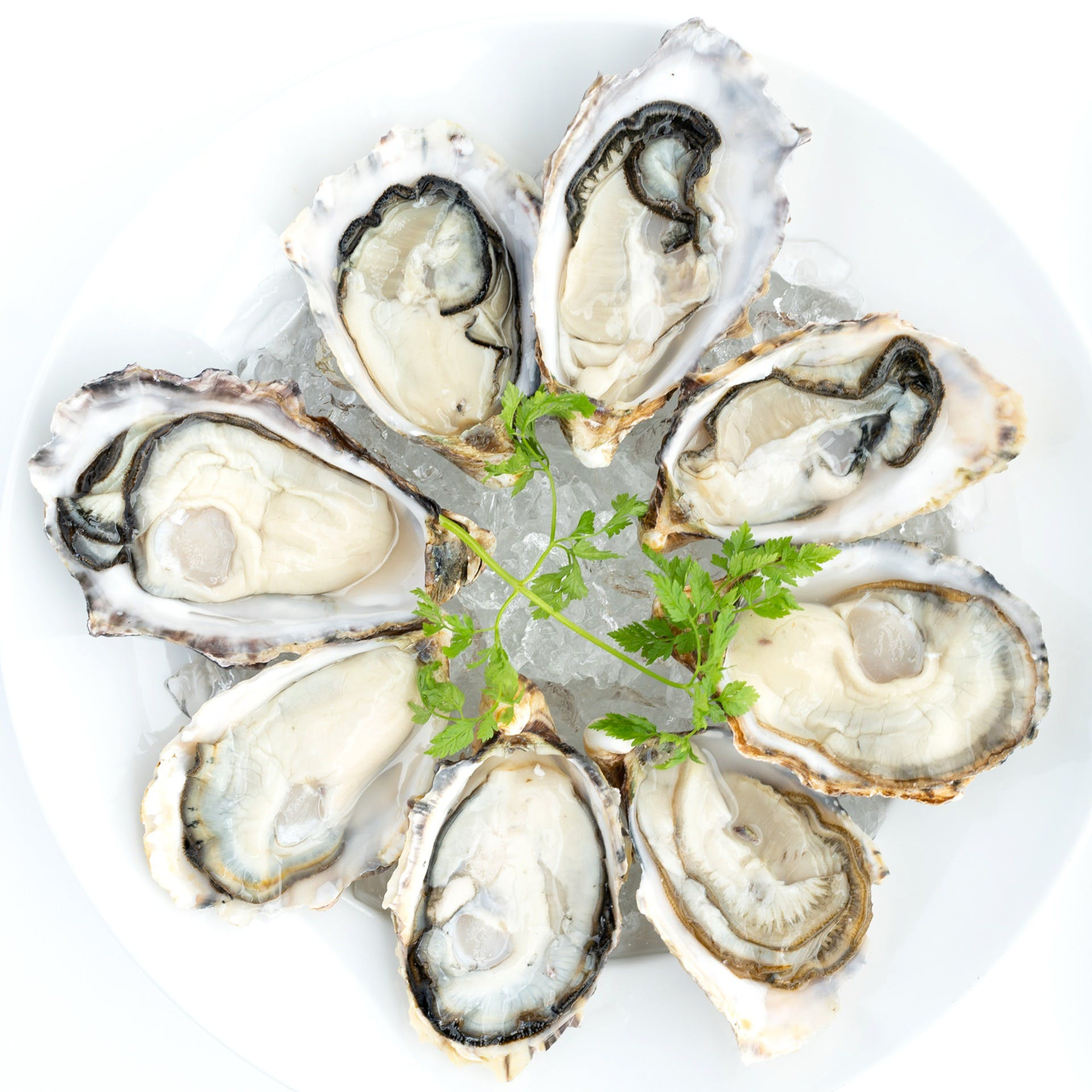 牡蠣フレンチコース、日本人に馴染み深い牡蠣とのマリアージュ
