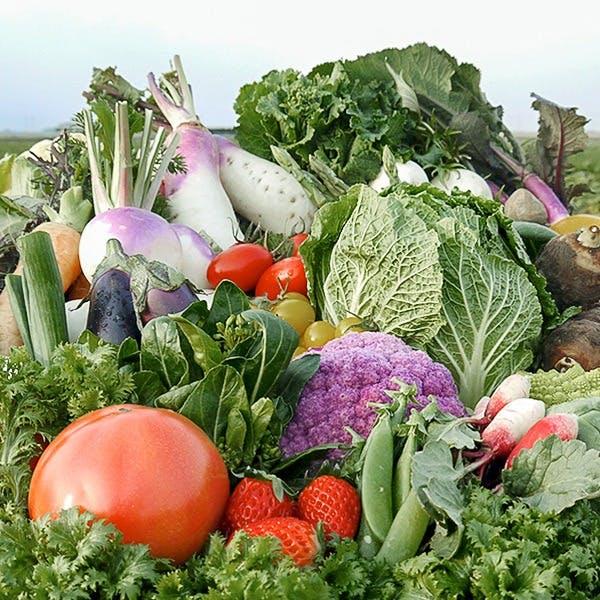近江野菜100種類以上揃う