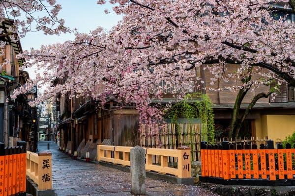 祇園白川沿い